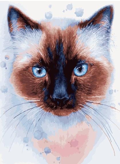 Картина по номерам 40x50 Кот с голубыми глазами